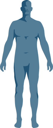 Body - Front